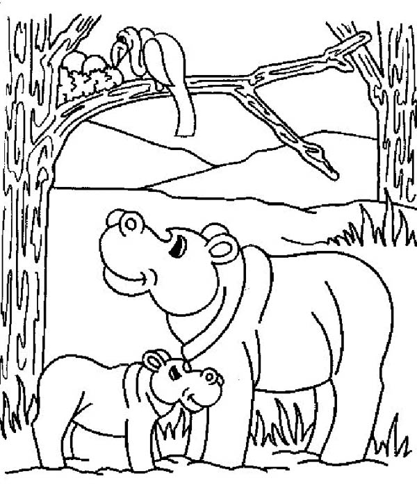 Mother hippo and her baby in the jungle coloring page netart for Baby hippo coloring pages