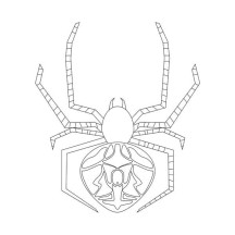 Orb Weaver Spider Coloring Page