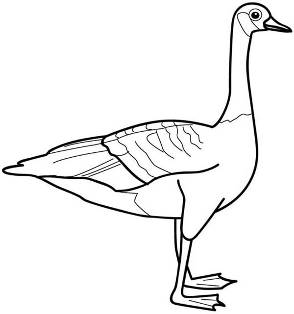 Picture Of Goose Coloring Page
