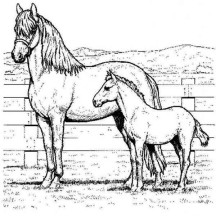 Picture of Horse and Baby Horse in Horses Coloring Page