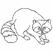 Raccoon Drawing Coloring Page
