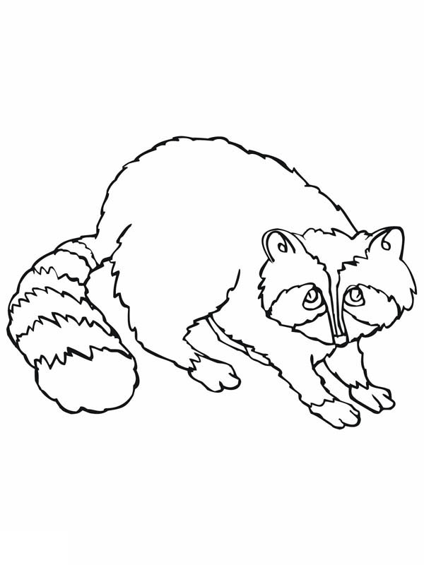 Line Drawing Raccoon : Raccoon drawing coloring page