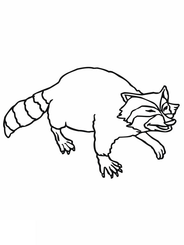 Chester Raccoon Page Coloring Pages Raccoon Face Coloring Page