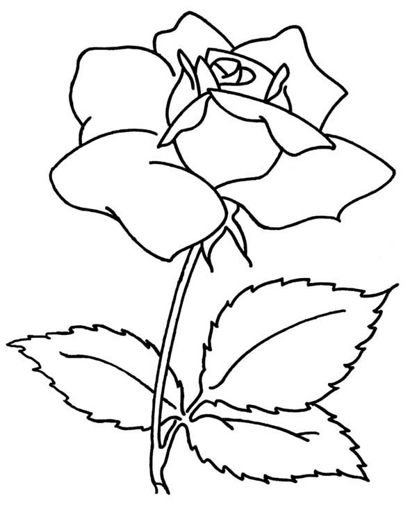 rose flower coloring page