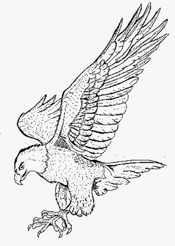 Smooth Landing Bald Eagle Coloring Page NetArt