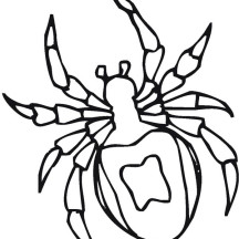 Tarantula Spider Drawing Coloring Page