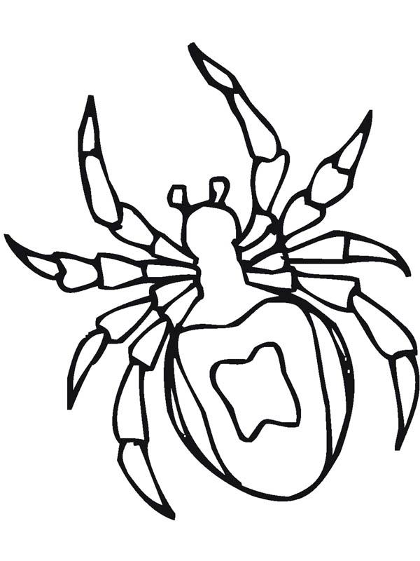 Tarantula Spider Drawing Coloring Page Netart Tarantula Coloring Page
