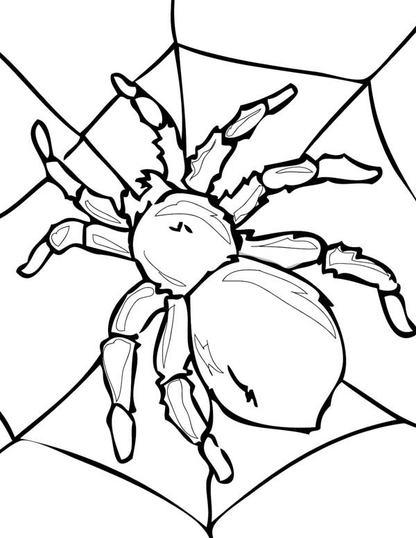 Tarantula on His Spider Web Coloring Page  NetArt