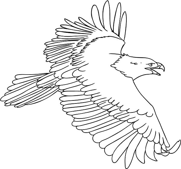 The Flying Bald Eagle Coloring Page - NetArt