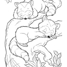 Two Baby Raccoon Coloring Page