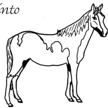 Two Colored Horse in Horses Coloring Page