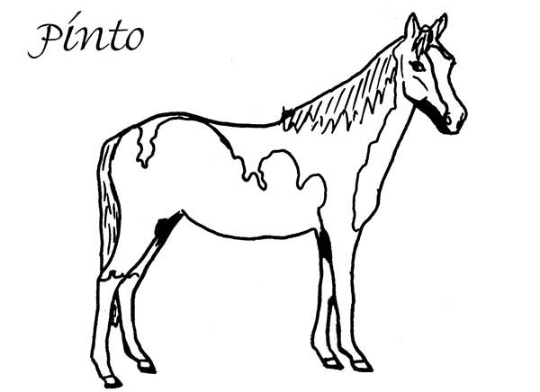 Two Colored Horse in Horses Coloring Page NetArt