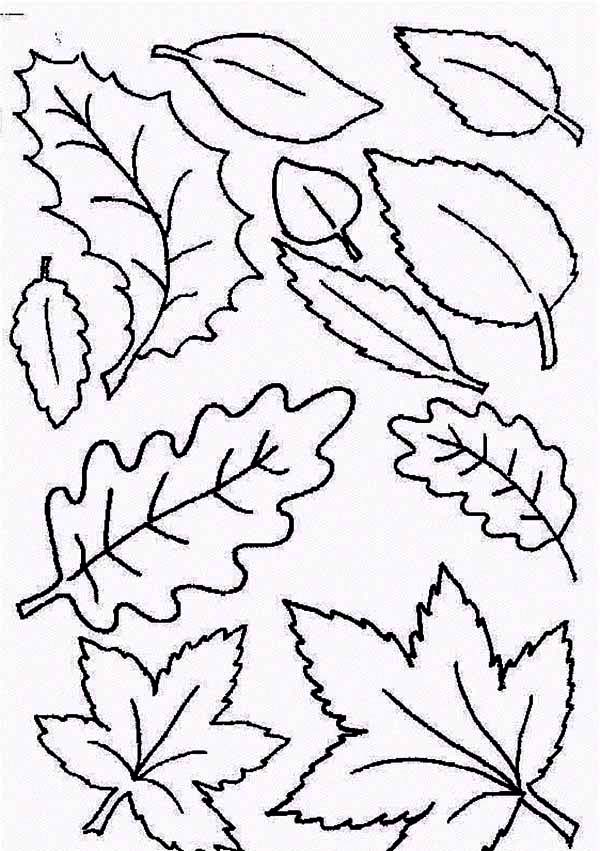 Type of Fall Leaf Coloring Page