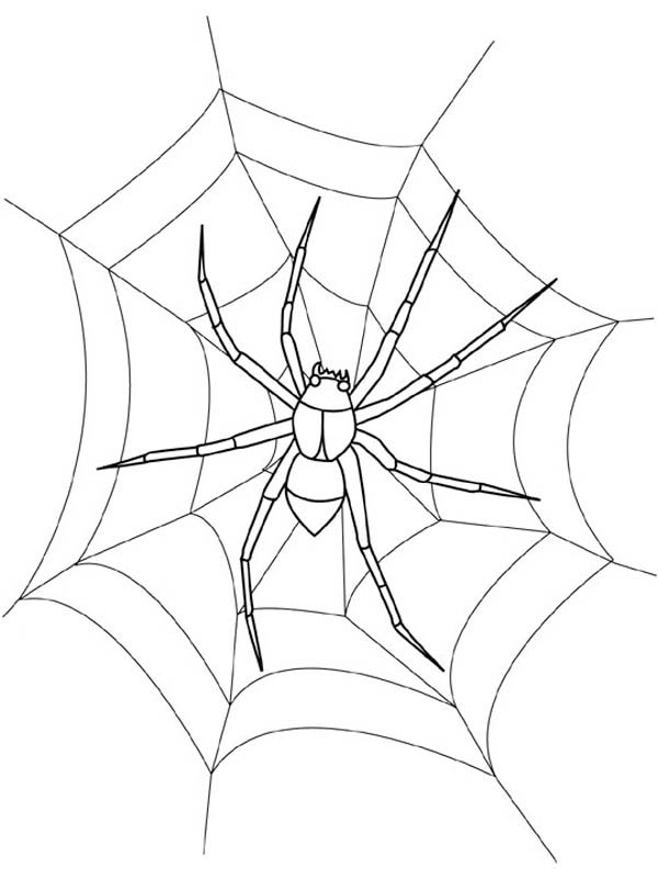 Waiting Fro Food On Spider Web Coloring Page Netart Spider Web Coloring Page