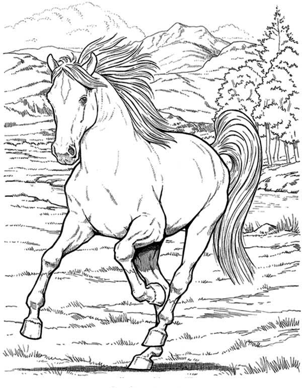 wild horse in horses coloring page - Horse Color Pages