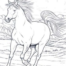 Wild Horse in Running in Horses Coloring Page