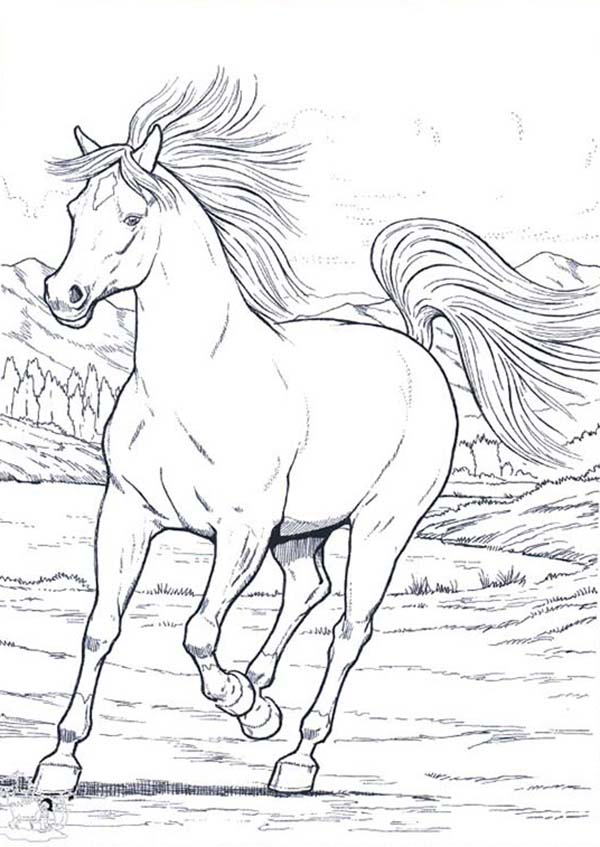 coloring pages horses running - photo #41