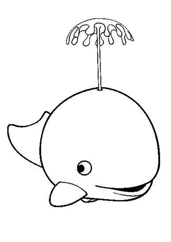 A Killer Whale Spouting Water Coloring Page NetArt