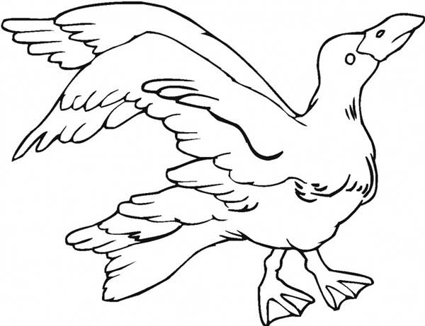 Angry Seagull Coloring Page