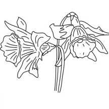 Awesome Drawing of Daffodil Coloring Page