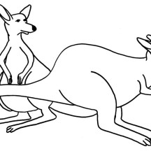 Awesome Kangaroo Couple Coloring Page