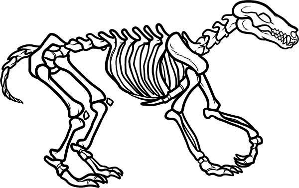 Awesome Wolf Skeleton Coloring Page NetArt