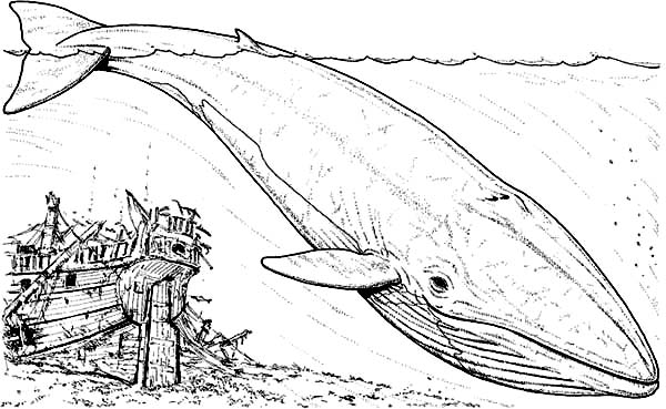 Blue Whale Dive Near Sinking Galleon Coloring Page