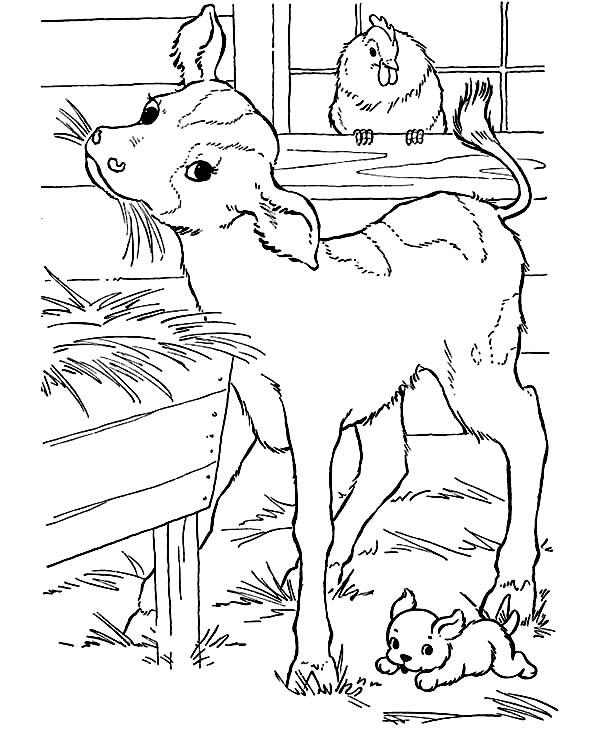 Cow Baby Eating Straw Coloring Page