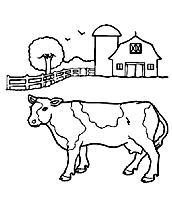 Cow in Front of Barn Coloring Page