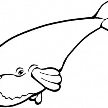 Cute Drawing of a Blue Whale Coloring Page