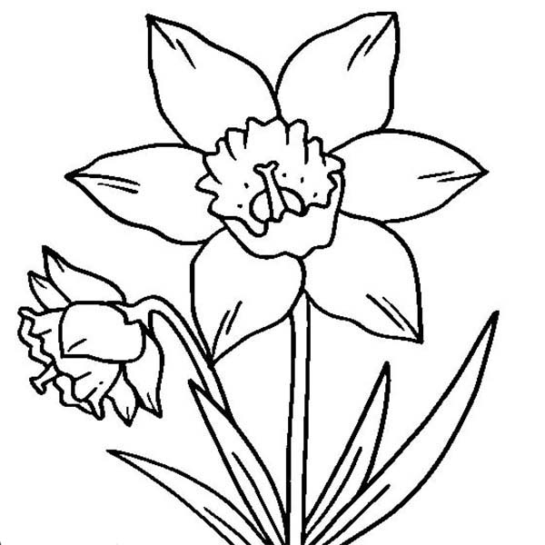 D Is For Daffodil Coloring Page