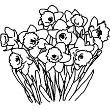 Daffodil Flower Bouquet Coloring Page
