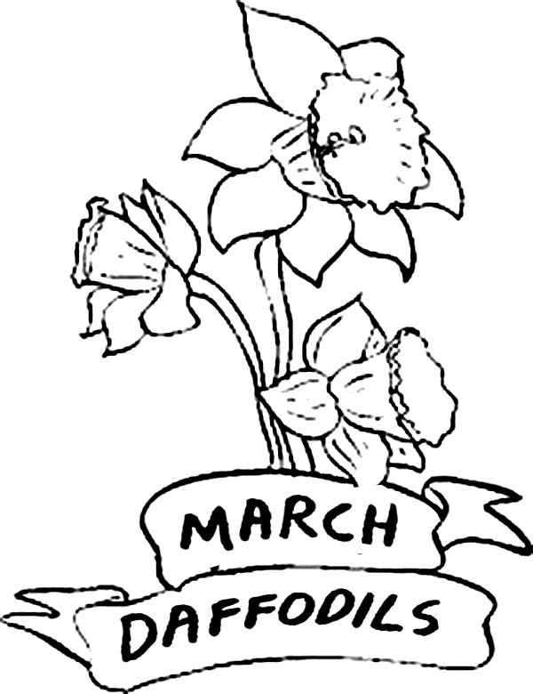 coloring pages of march - daffodil flower in march coloring page