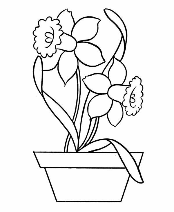 Daffodil Pottery Coloring Netart