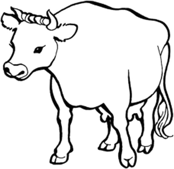 Healthy Cow Coloring Page - NetArt
