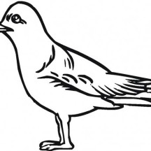 How to Draw a Seagull Coloring Page