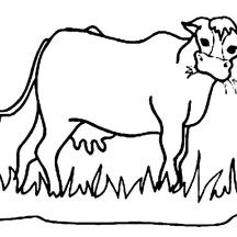 Hungry Cow Eating Grass Coloring Page