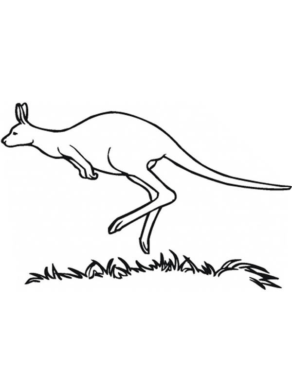 Kangaroo Jumping in the Meadow Coloring Page
