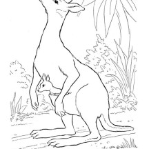 Kangaroo and Baby Kangaroo in the Jungle Coloring Page