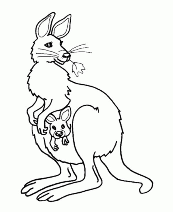 Boxing Kangaroo Free Colouring Pages