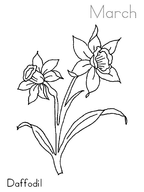 Daffodil Flower In The Garden Coloring Page MEMEs