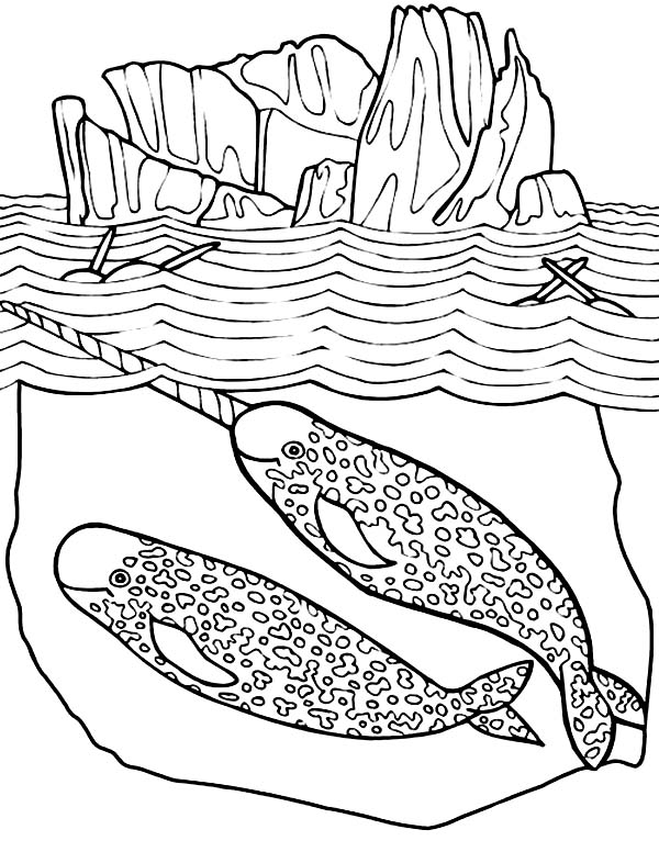Narwhal Mating Coloring Page