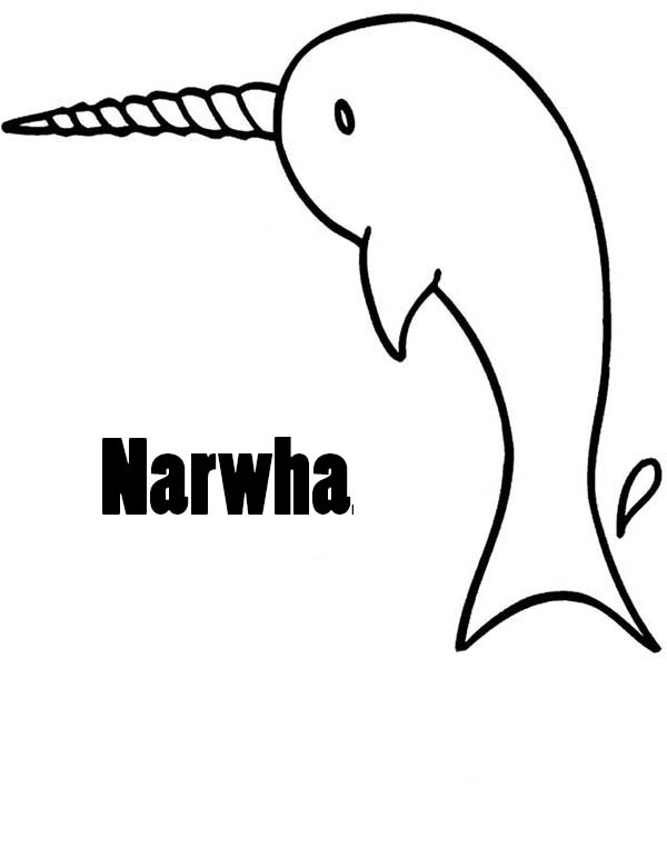 Narwhal Picture Coloring Page