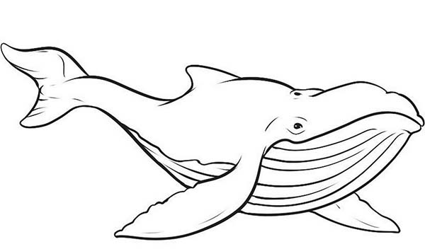 picture of blue whale coloring page - Whale Coloring Pages