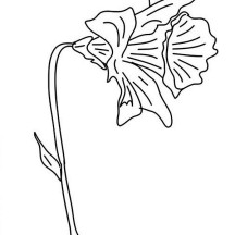Picture of Daffodil Coloring Page