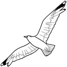 Seagull Floating in the Sky Coloring Page
