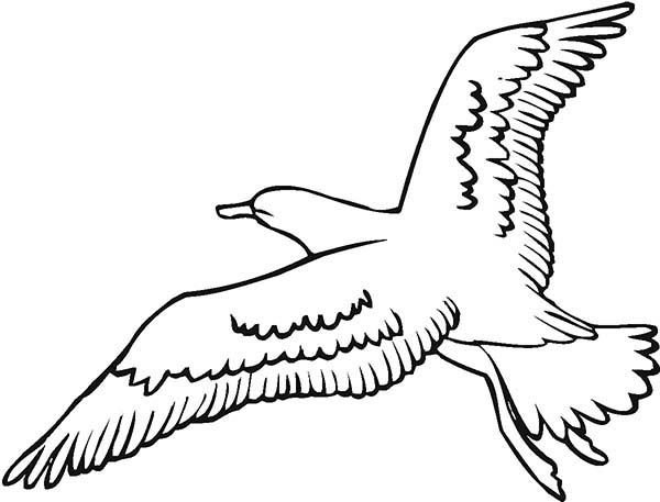 Seagull Image Coloring Page