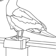 Seagull on the Fence Coloring Page