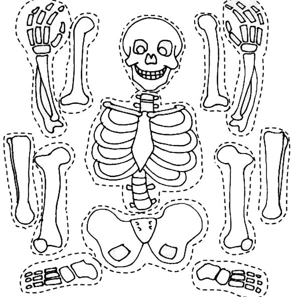 Skeleton and His Bones Part Coloring Page NetArt