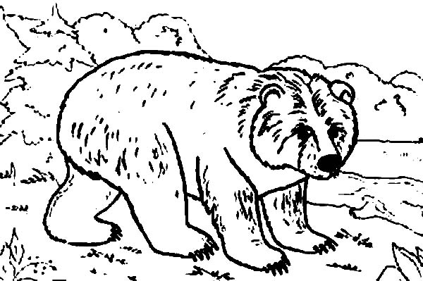 Bear in the Jungle Coloring Page